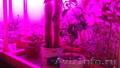 Светодиодное освещение для роста растений.